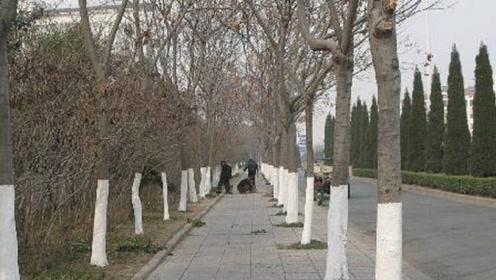 """为何冬天要给树干刷""""白漆""""?答案和你想的一样!"""