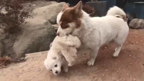 自家公狗偷回两只小狗宝宝,主人查探原因,被暖到了