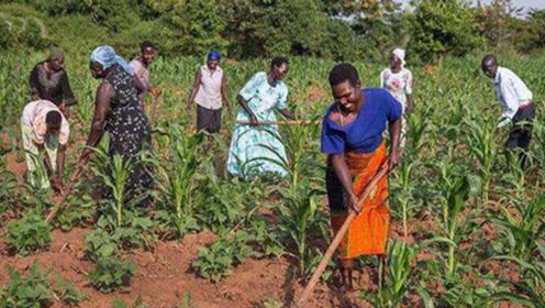 非洲人坦言:感谢中国人,让我们知道非洲土地也能长食物!