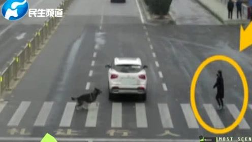 斑马线前不停车让狗被罚款扣分?交警辟谣称网传图片裁剪掉了行人