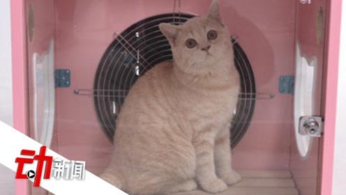 """萌宠消费数据:90后""""把宠物当娃养"""" 一只猫一年花费4755元"""