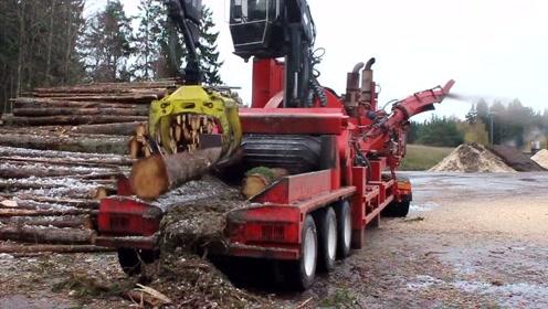 德国制造的大型树干粉碎机太牛了,吞吐量很强大,这种适合国情吗