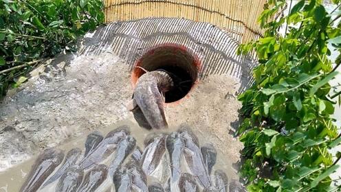 户外捕鱼攻略!你学会了吗?