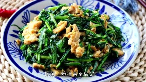 秋季蒲公英怎么吃更养生?清热解毒祛湿气!