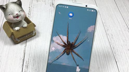 在手机里养一只蜘蛛,有人动你手机,它就爬出来