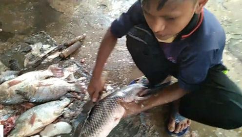 小男孩帮忙杀鱼,瞬间被这一手娴熟的去鱼鳞技术折服了,太厉害了