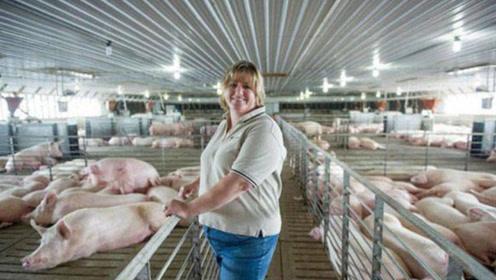 为什么美国人不吃猪肉,却还是养猪大国?看完解开多年疑惑