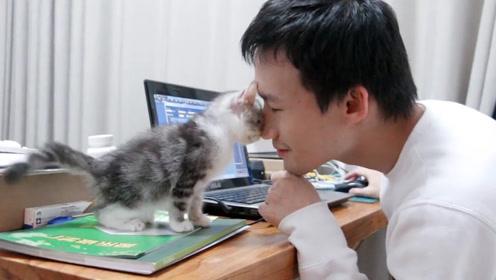 这就是为啥不让男生养猫的原因了,男生养猫后根本就不需要女朋友了!