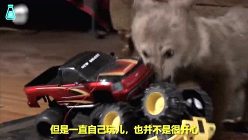救济站的熊宝宝找朋友,结果屡遭拒绝,直到遇上这位暖心大哥哥