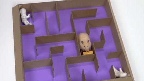 主人给仓鼠做了一个迷宫窝,仓鼠通过一层层关才能出来,它真聪明