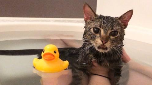 趣味乐生活:小猫咪洗干净 好乖啊