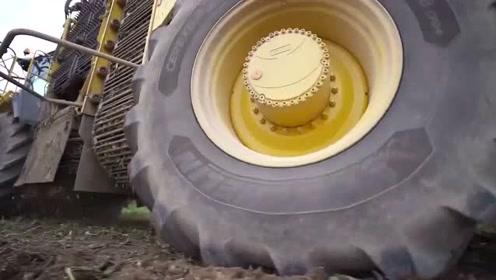 德国Ropa罗霸Panther黑豹2甜菜收割机,作业实拍记录
