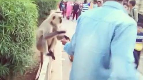 男子一耳光拍翻猴子,猴子当场就懵了,网友:干的漂亮!
