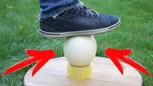 鸡蛋承重能力很强,那鸵鸟蛋呢?老外整个人都站上去,结果惊喜了