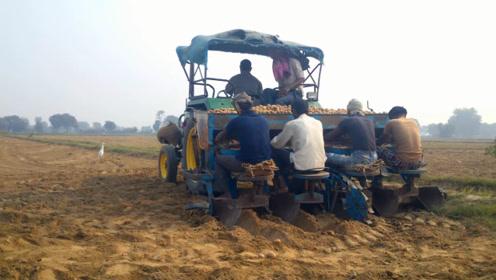 印度人是如何种土豆的?半自动机械还是很先进的,坐着就把活干了