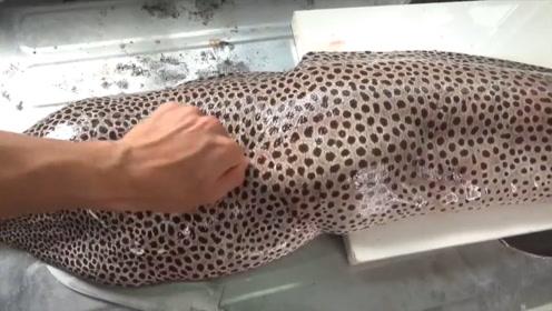 日本小哥切割巨型海鳗鱼,足足有25斤重,一条就够50个人吃