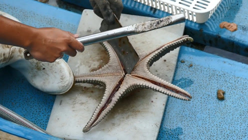渔民捕到一只海星,一刀下去,意外的事情发生了!