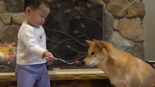 现在的狗狗真难伺候,吃饭都得人喂:狗生巅峰