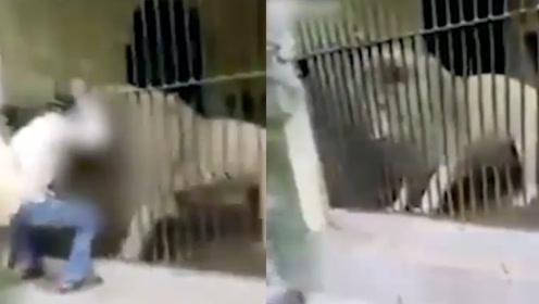 饲育员投喂狮子被咬住手臂长达40秒,游客转移狮子注意力助其得救
