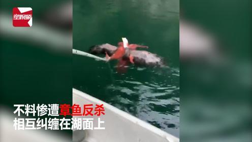 神反转!老鹰袭击章鱼被反杀,渔民心疼出手相救