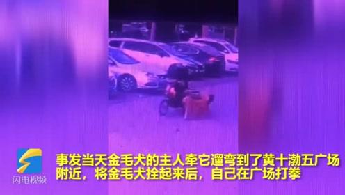 33秒丨这都敢偷!滨州一老人光天化日下竟然牵走了一只金毛犬