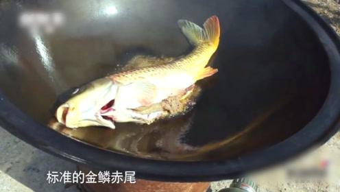 黄河边钓黄河鲤鱼,钓上来直接拿河水炖了,最豪放野餐