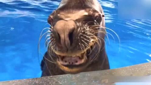 周末带孩子去水族馆玩,发现养娃不如养个海豹