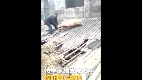二师兄受惊出逃蹿上屋顶 遭主人拽后腿拖下