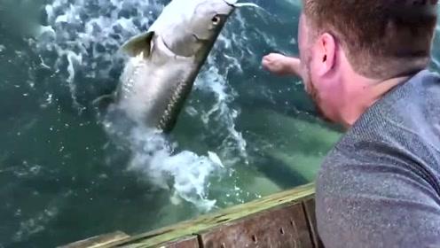 男子海边喂鱼遭遇惊魂一刻 整只手被大鱼吞入口中