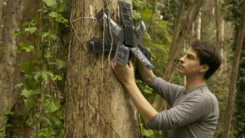 拯救热带雨林真的那么难?其实一台旧手机就足够了