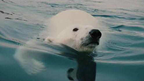 南极学前班——南极野生动物