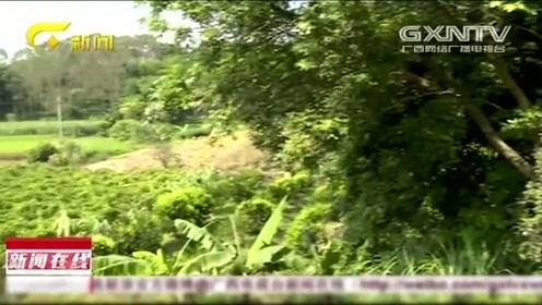 广西十岁女孩卖百香果回家途中遇害,疑遭嫌犯性侵后藏尸草丛