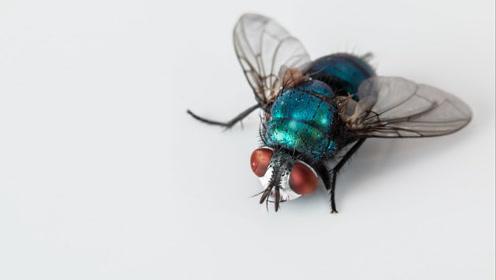 虫子可以杀死你,或者拯救你的生命