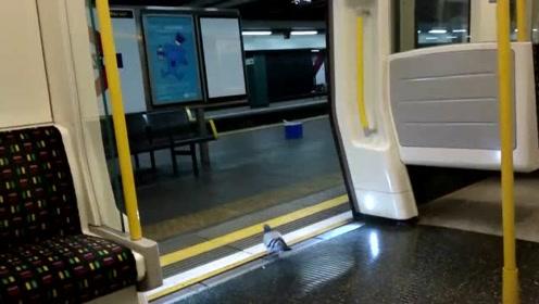 """伦敦滑铁卢车站野鸽成灾终遇天敌 当局请""""鹰""""应对"""