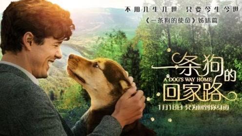 """《一条狗的回家路》""""命定之旅""""终极预告 有生之年竟然被一条狗""""偷窥""""了生活"""