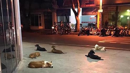 流浪狗主人突然昏倒被救护车接走,6只小狗一路狂追在医院外守候