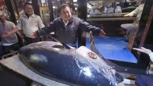 世界上最贵的鱼,身价达到了2000万,比大熊猫还濒危但却不被保护