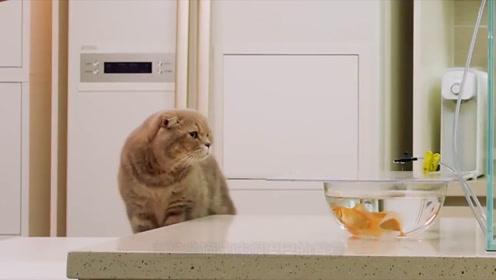 主人买回鱼来,却故意引逗猫咪,猫只能喝喝缸水过过嘴瘾了