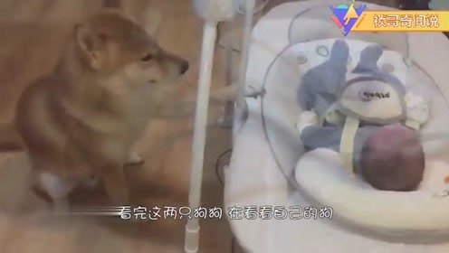 自从狗狗学会了带娃,妈妈每天就轻松多了!(1)