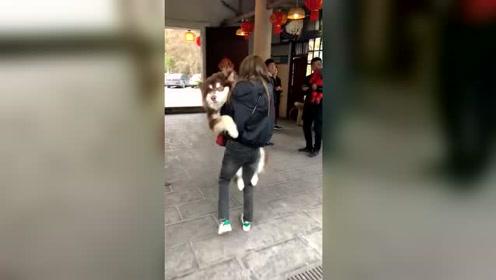 谁还不是个宝宝?这只狗子的待遇不一般!