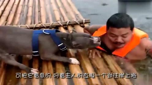 主人受伤送医院,两条狗一直跟着,比谁都着急,镜头拍下感动场面