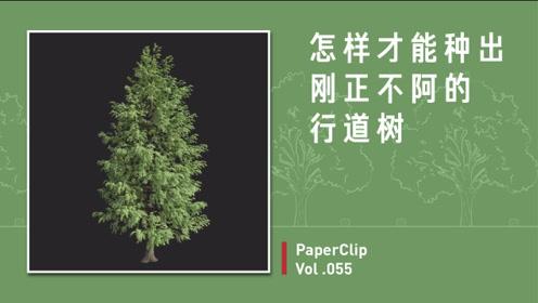 Vol.055 怎样才能种出刚正不阿的行道树?