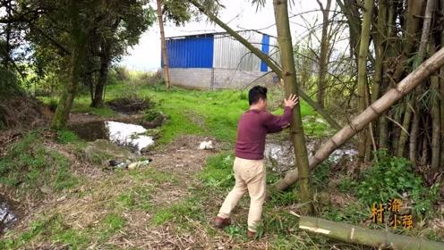 小强打算做一艘船捕鱼,大竹子已经砍好了,要怎么下手制作呢