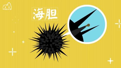 """海胆有""""海中刺客""""之称,它的刺都可以做什么?"""