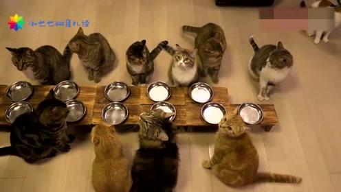 一群小可爱,乖乖地走到自己的位子上,等着大家开饭