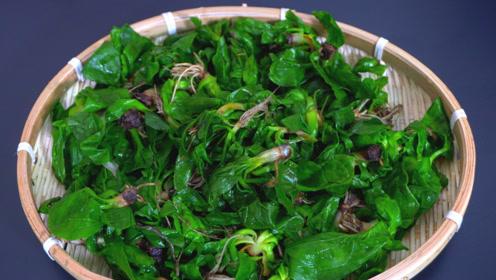 家里有痛风的人,牢记1道野菜,每天吃2口,利尿消肿,减少尿酸