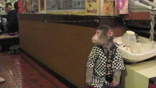 服务员是猴子的饭店你们见过吗?端茶送水样样都会,生意异常火爆!