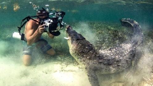 与巨口鳄鱼面对面拍照 冒死特写看得人胆颤
