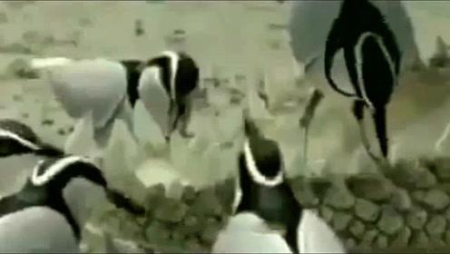 鸟给鳄鱼当牙刷?这些动物清洁工你一定没见过