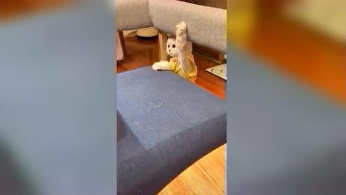 呀!这猫的走位厉害了,堪比动作戏影后呐